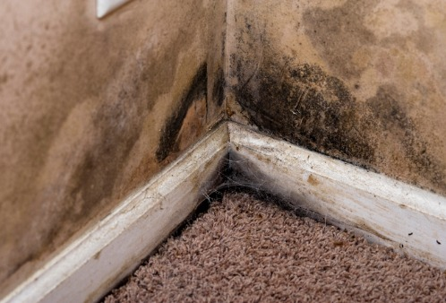 Mold growth in the corner of a room, needing Mold Remediation