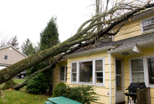 A home with a fallen tree on it, needing storm damage restoration